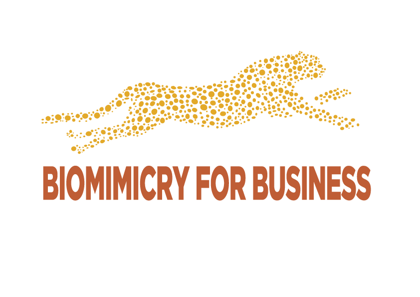 Biomimicry For Business