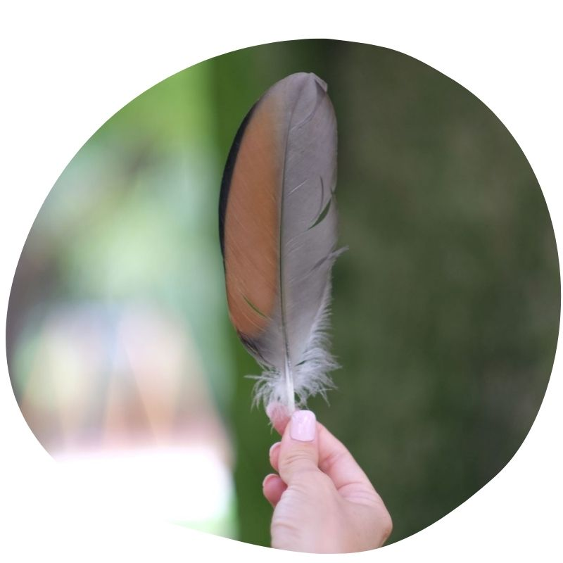 biomimicry-for-business-services-inspirational-speech-feather